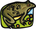 Frog picture avatar