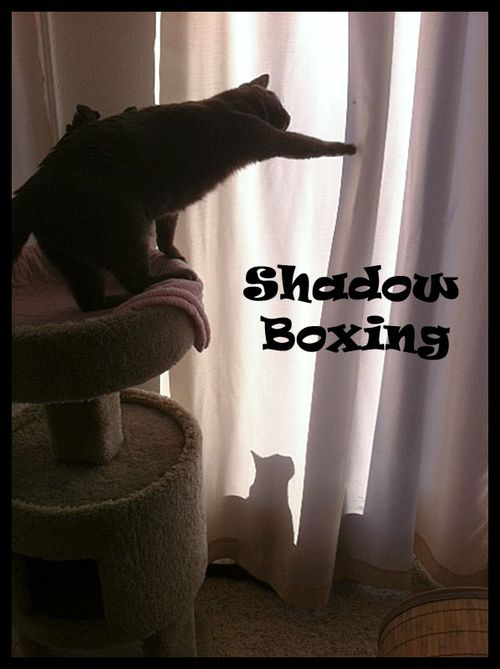Shadow-Boxing-with-frame-an