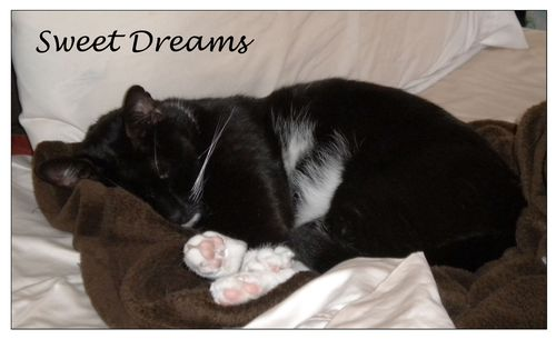 Sweet-Dreams-words