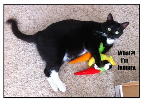 Catnip-Veggies-words---hung